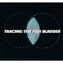 Tracing+The+Fish+Bladder+Invitation+Card_Front