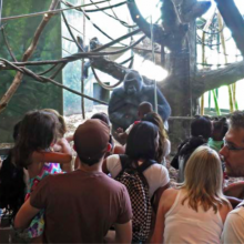 """""""The space of the audience is a performative space."""" photo: David Helbich, Lincoln Park Zoo, Chicago, 2015"""